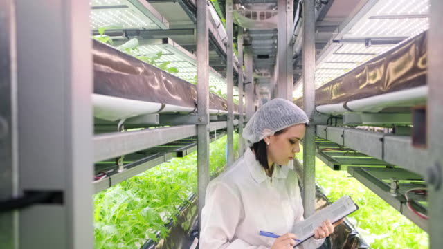female indoor farm worker monitoring crop development - emergence stock videos & royalty-free footage