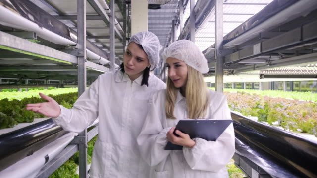 female indoor farm workers monitoring crop development - stem stock videos & royalty-free footage