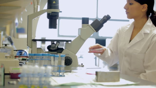 MS TU PAN Female laboratory technician looking into microscope in Cancer research Healthcare medicine Industry DNA sequencing Laboratory / Vancouver, BC, Canada