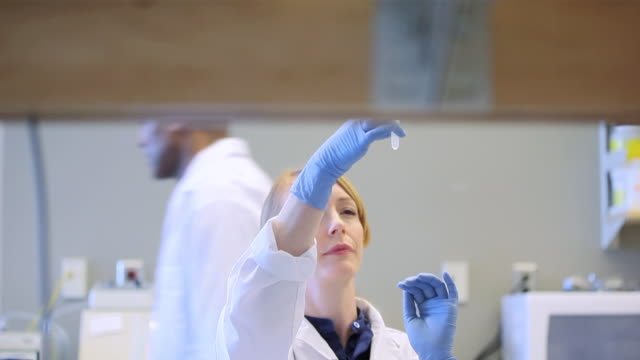 ms td female laboratory technician studying lab sample / vancouver, bc, canada  - medical research stock videos & royalty-free footage