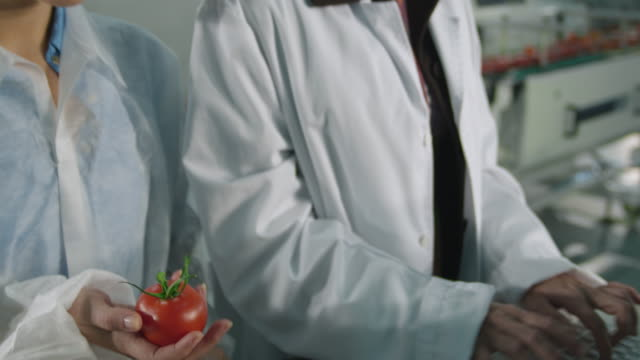 cu tu female manager and female worker in protective clothing checking box of tomatoes in food processing plant / algarrobo, malaga, spain - 食品工場点の映像素材/bロール