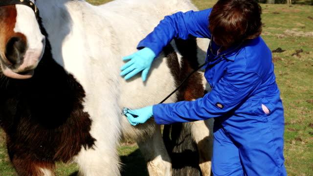 vídeos de stock e filmes b-roll de female medic examining a horse - mamífero ungulado