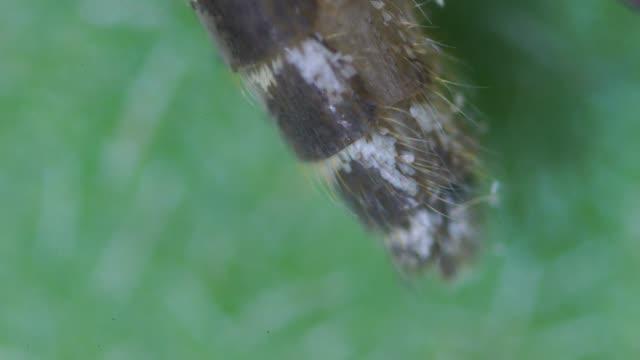 female mosquito under microscope - 虫刺され点の映像素材/bロール