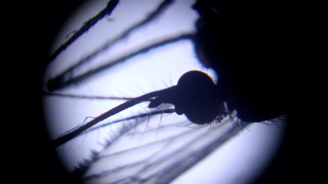 stockvideo's en b-roll-footage met vrouwelijke mug onder microscoop - mug