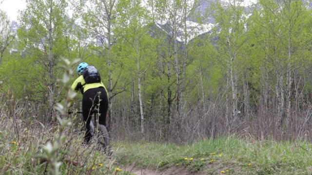 female mountain biker follows mountain path, through aspen grove - grove stock videos & royalty-free footage