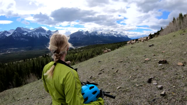 female mountain biker looks off from high viewpoint - bighorn sheep stock videos & royalty-free footage