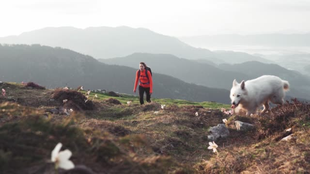 Female mountain hiker walking with her dog on a green mountain peak full of flowers