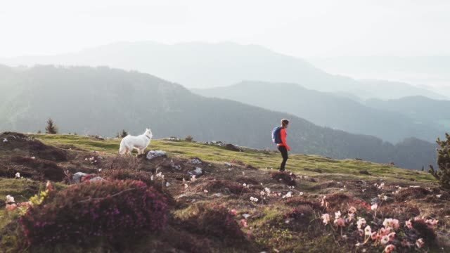 Female mountain hiker walking with her dog