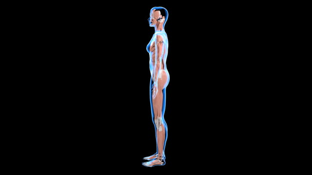 stockvideo's en b-roll-footage met female muscular system - vrouwelijke gestalte