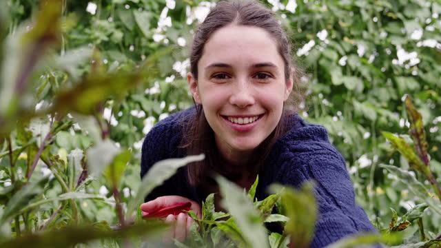 stockvideo's en b-roll-footage met female nursery worker working inside the greenhouse - arbeider
