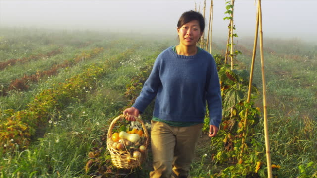 pov female organic farmer walking in field with wicker basket full of vegetables and dog, manchester, vermont, usa - vermont stock videos & royalty-free footage