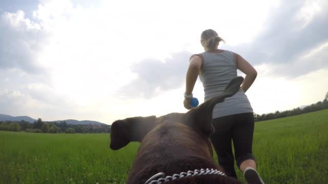 pov kvinnliga ägare leker med hennes hund på ängen - linne topp bildbanksvideor och videomaterial från bakom kulisserna