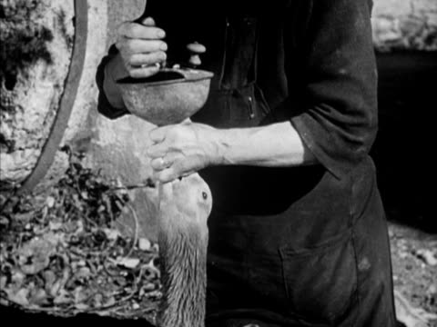 female peasant worker forcefeeding goose w/ funnel putting food pouring liquid stroking throat goose walking away after feeding france country foie... - gras stock videos and b-roll footage