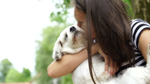 female pet owner kissing with her dog - licking stock videos & royalty-free footage