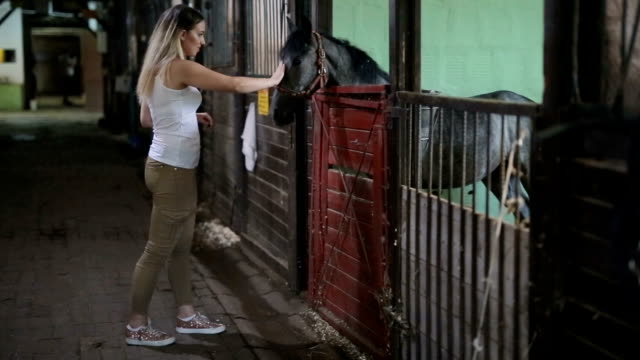 female petting horse in stable - livestock stock videos & royalty-free footage