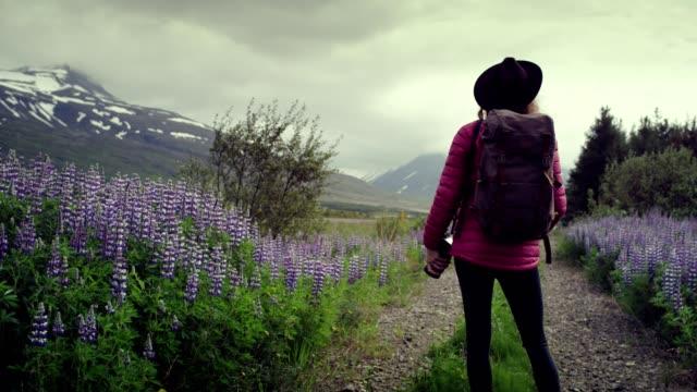 female photographer exploring lupine meadow - femininity photos stock videos & royalty-free footage