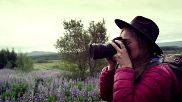 vídeos de stock e filmes b-roll de female photographer exploring lupine meadow - fotógrafo