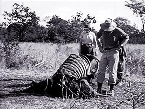 1947 Female photographer visits the Serengeti plain and views its wildlife