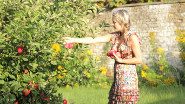 vidéos et rushes de female picking apples from tree and walks away - pomme