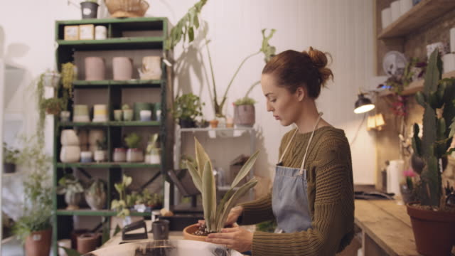 female plant shop store owner working in store planting in pot - young women stock videos & royalty-free footage
