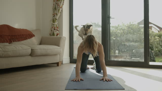 female practicing yoga exercise at home together with dog on floor - millennial generation stock videos & royalty-free footage