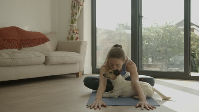 female practicing yoga exercise at home together with dog on floor - wooden floor stock videos & royalty-free footage