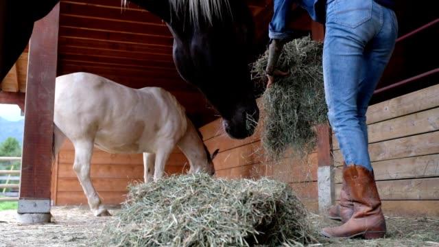 weibliche rancher fütterung ihre pferde - füttern stock-videos und b-roll-filmmaterial