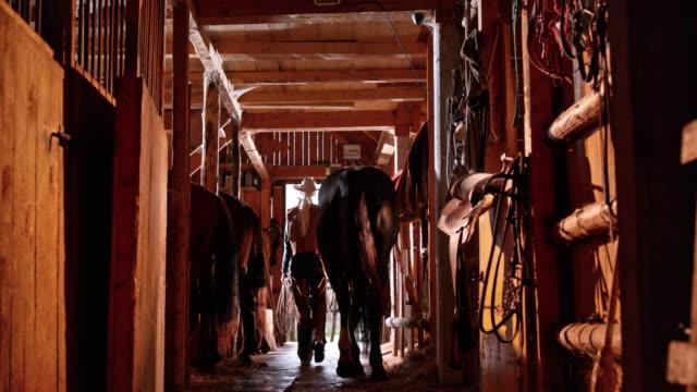 vídeos de stock, filmes e b-roll de fazendeiro de ds fêmea levando seu cavalo fora do estábulo - montar um animal