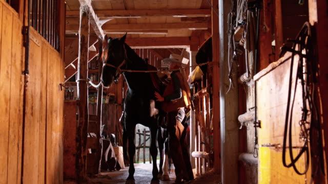 vídeos de stock, filmes e b-roll de fazendeiro de ds fêmea amarrando a sela do cavalo - montar um animal