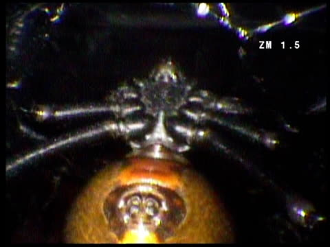 female red back spider hangs from her web - arachnophobia stock videos & royalty-free footage
