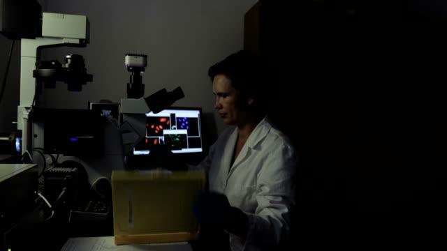 vídeos de stock, filmes e b-roll de feminino pesquisador analisar amostras de marcado com fluorocromo células com um microscópio de fluorescência - amostra científica