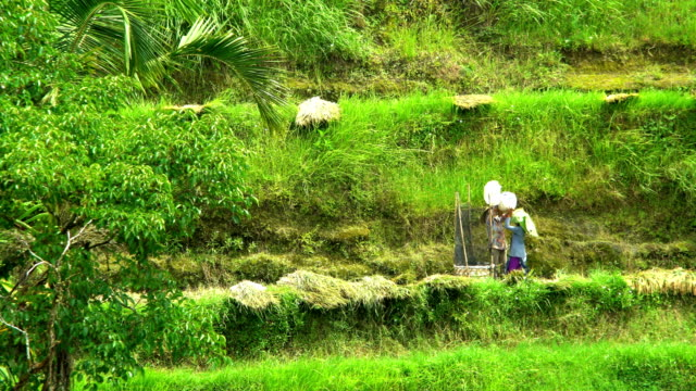 female rice farmer unesco world heritage site bali - irrigation equipment stock videos & royalty-free footage