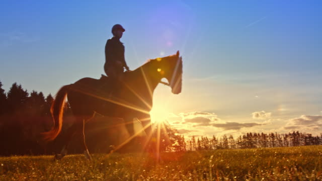 slo mo ds female rider on horse in setting sun - panning stock videos & royalty-free footage