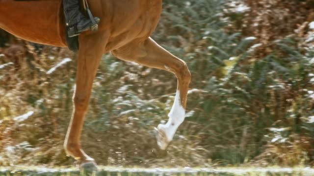 SLO MO TS vrouwelijke ruiter een running bruin paard rijden