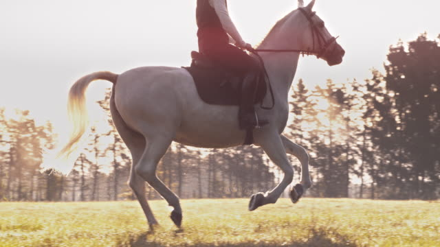 SLO MO Female riding cantering white horse in morning meadow