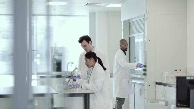 female scientist discussing results of experiment with male colleague - microbiology stock-videos und b-roll-filmmaterial