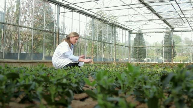 female scientist examining soil sample of flora in a greenhouse - vetreria da laboratorio video stock e b–roll