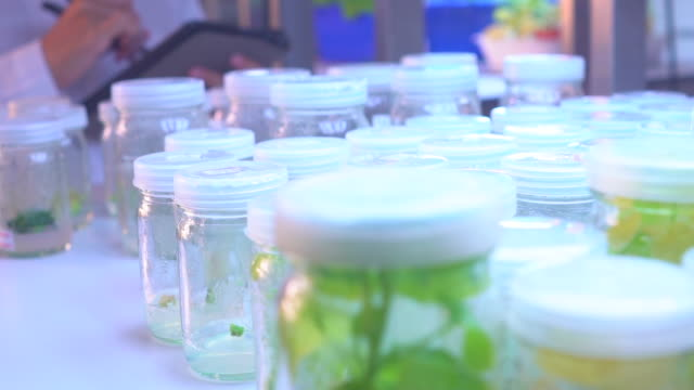 female scientist in tissue culture modern laboratory - cultures stock videos & royalty-free footage