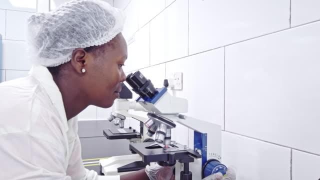 wissenschaftlerin nutzt mikroskop - haarnetz stock-videos und b-roll-filmmaterial