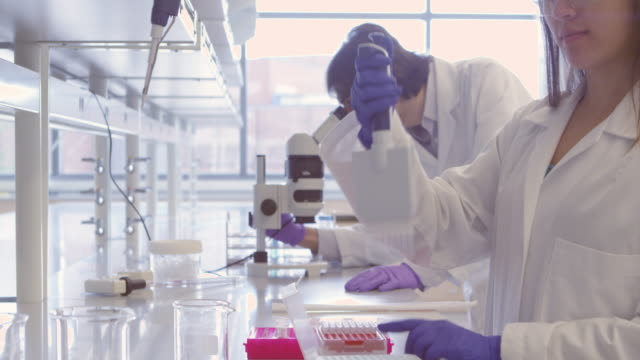 ms tu td pan female scientist using multichannel pipette in research laboratory with colleague working in the background - laboratory stock-videos und b-roll-filmmaterial