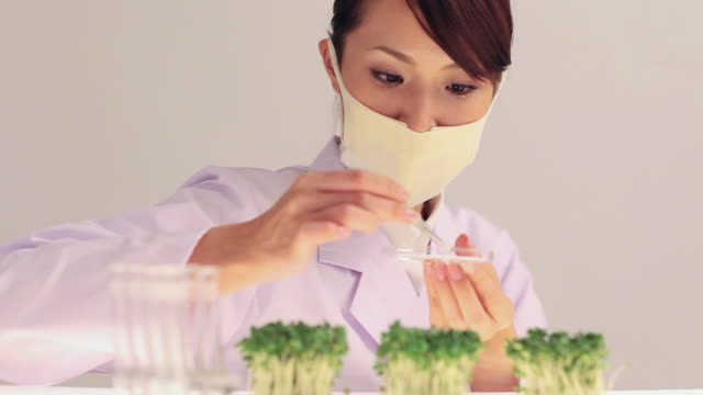 MS Female scientists examining vegetable seedling / Shibuya, Tokyo, Japan