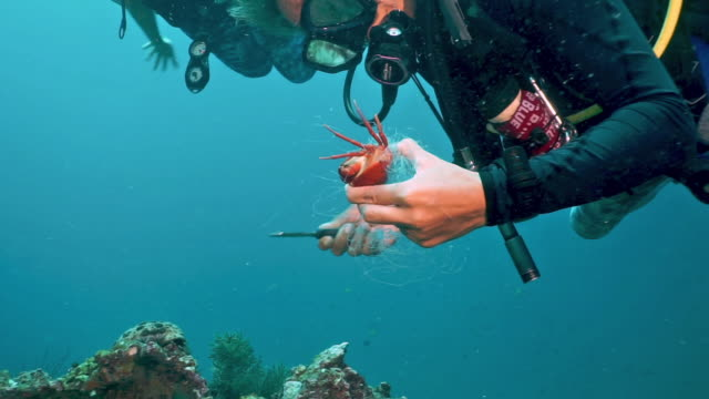 female scuba divers on environmental cleanup cutting trapped crab free from discarded fishing ghost net - pulizia dell'ambiente video stock e b–roll
