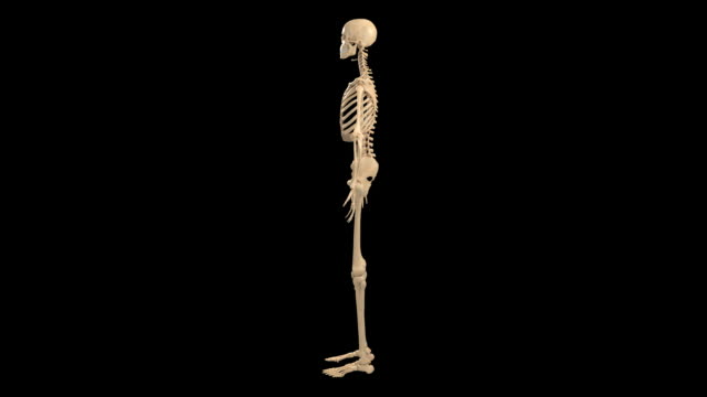 female skeletal system - biomedical illustration video stock e b–roll