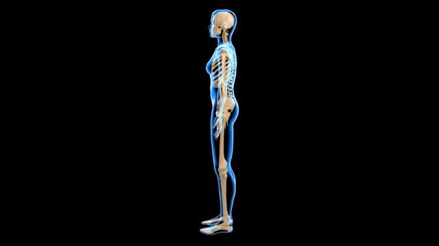 female skeletal system - knochen im beckenbereich stock-videos und b-roll-filmmaterial