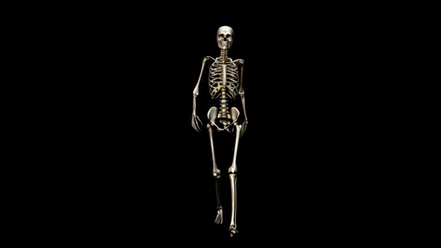 """Female skeleton, walking"""