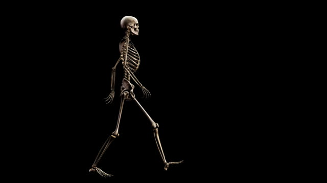 'Female skeleton, walking'