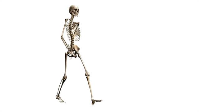 """female skeleton, walking"" - biomedical illustration stock videos & royalty-free footage"