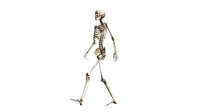 """""""female skeleton, walking"""" - menschliches skelett stock-videos und b-roll-filmmaterial"""
