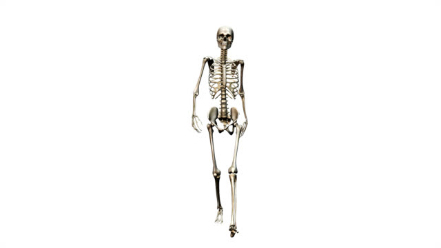 """female skeleton, walking"" - anatomy stock videos & royalty-free footage"