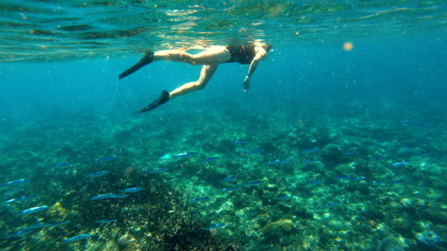 female snorkeling underwater in clear blue ocean fiji - underwater diving stock videos & royalty-free footage